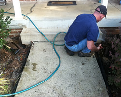 Dead animal removal in VA
